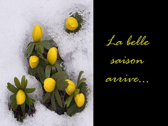 Le-printemps-arrive
