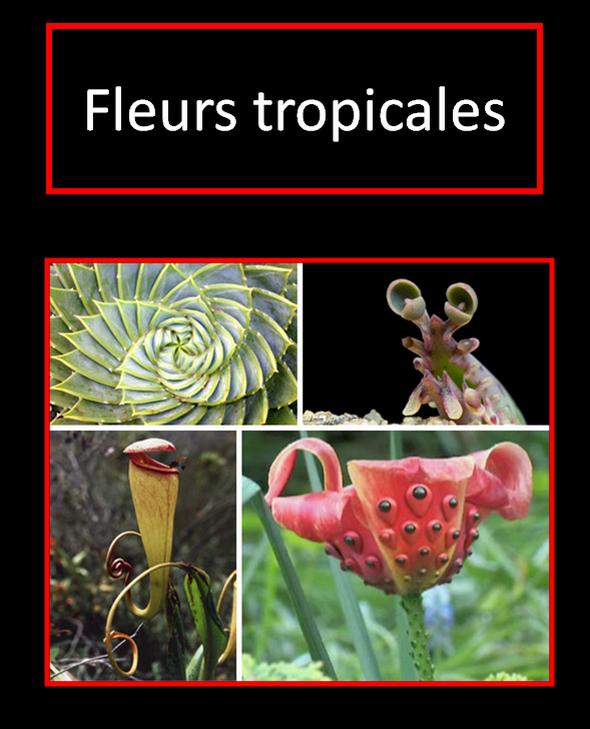 Fleurs-tropicales-etranges