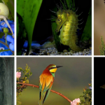Galerie-Animaux-insectes