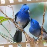 oiseau-nid