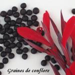 graines-conflore