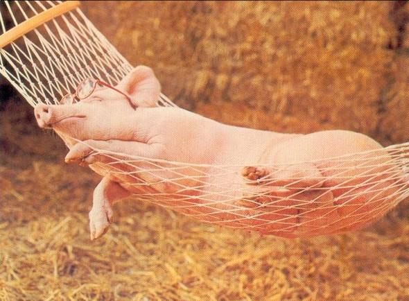 Cochon-Hamac