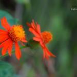 fleurs-reunion