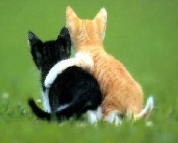 image animaux qui s'aiment