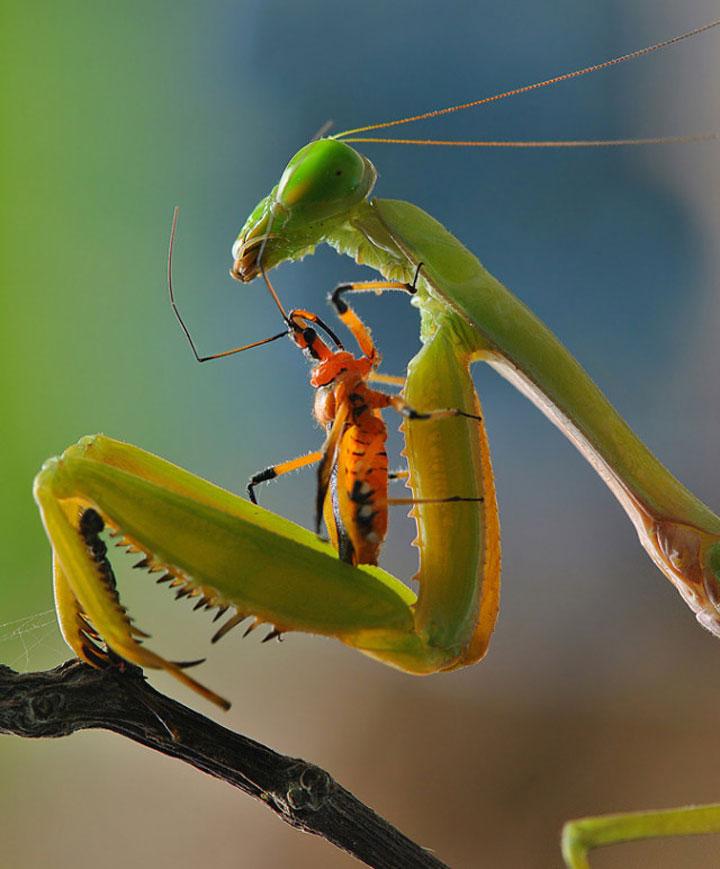 Galerie d'insectes. » Le blog de Radiblog